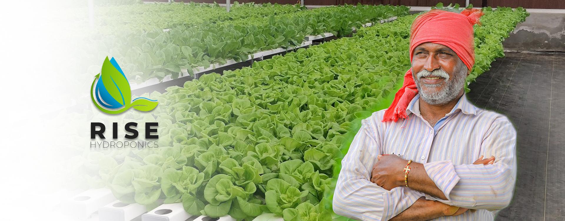 rise hydroponics