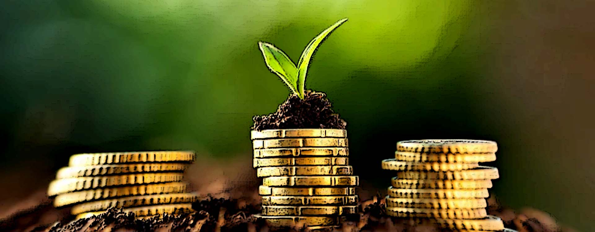 seed fund
